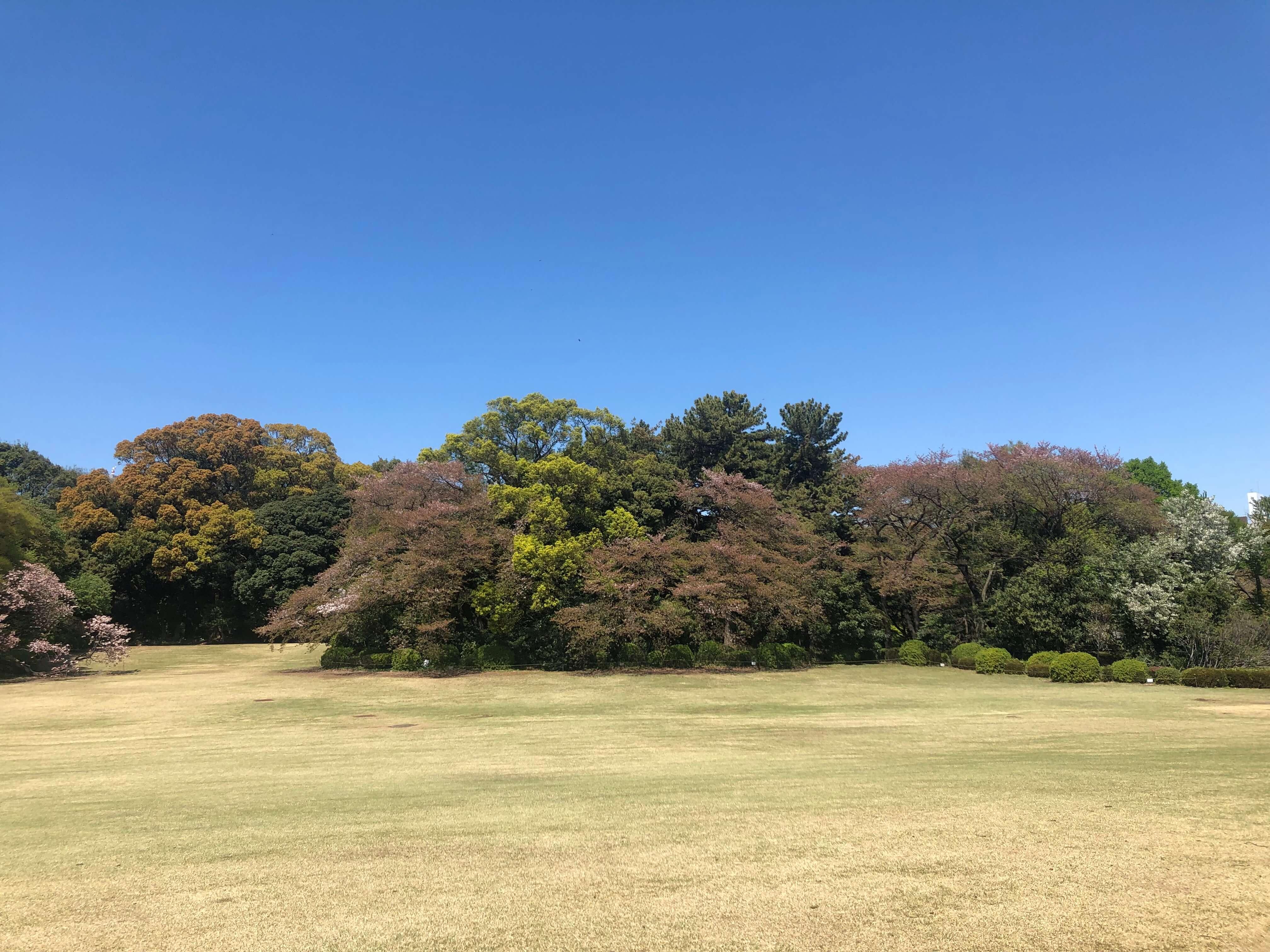 COTON 浜町・人形町 Hanare予約状況※4/24(水)更新